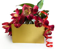 Gift card with flowers Stock Image