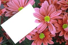 Gift card and pink flowers. A bouquet of pink flowers with a gift card Royalty Free Stock Photos