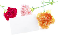 Gift card ready for text Royalty Free Stock Photos