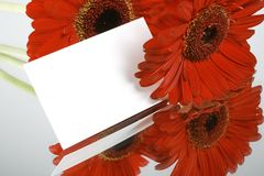 Gift card and red flowers. Red flowers with little gift card Stock Images
