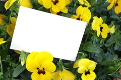 Gift card and yellow flowers. Yellow flowers with a gift card Royalty Free Stock Image