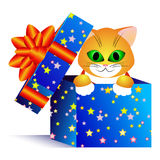 Gift and cat Royalty Free Stock Photography
