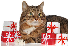 Gift & cat Stock Photo