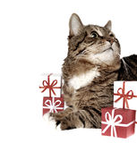 Gift & cat Royalty Free Stock Photos