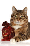 Gift fir cat Stock Photos