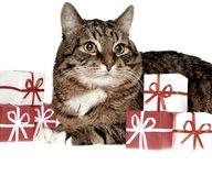 Gift fir cat. Gift & cat on a white background Stock Photos