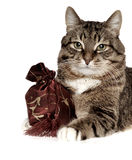 Gift fir cat Royalty Free Stock Images