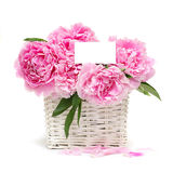 Gift. Flowers and a white blank with copy space Royalty Free Stock Photos