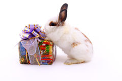 Gift and hare. Isolated on white background royalty free stock photography