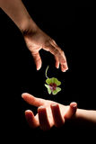 Gift of luck. Hand giving a shamrock or clover of luck to another hand stock photos