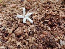 gift of nature stock photo