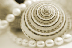 A gift from the ocean. Pearls,shells Royalty Free Stock Image