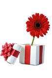 Gift and red flower Royalty Free Stock Images