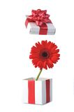 Gift and red flower Royalty Free Stock Image