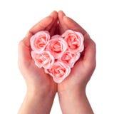 Gift rose heart Stock Image