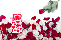 Gift of rose petals. Red rose on white Royalty Free Stock Images