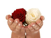 Gift of roses Stock Images