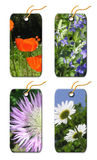 Gift tags whis  flowers Stock Photos