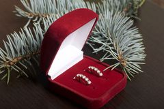 A gift to a loved one. An open velvet box of red color with gold earrings. On a dark background with a spruce branch. Stock Photos