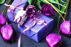 Gift and tulip Stock Images
