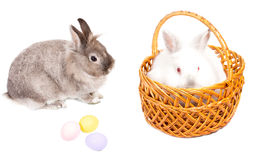 Gift of Easter bunnies and eggs. Gift of two cute little Easter bunnies, one fluffy white one in a wicker basket and the second grey one sitting sideways Royalty Free Stock Photos