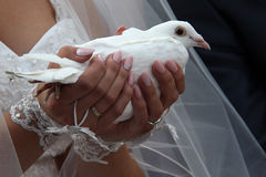 Gifta sig duvan Royaltyfria Foton