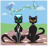 Gifta sig för katter Arkivbild
