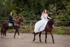 Gifta sig par på hästar Fotografering för Bildbyråer