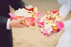 Gifta sig rose petals i händer Fotografering för Bildbyråer
