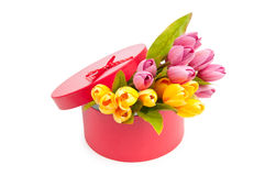Giftbox and tulips. On white royalty free stock images