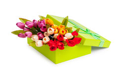 Giftbox and tulips isolated Stock Image