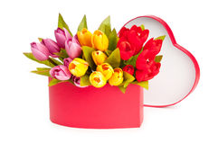 Giftbox and tulips isolated. On white stock photography