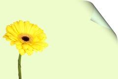 giftcard en bloem Royalty-vrije Stock Afbeelding