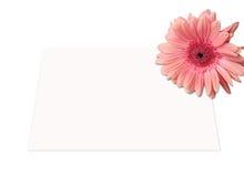 Giftcard und Blume Stockfotografie