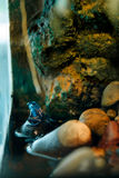 Giftige kikker Royalty-vrije Stock Afbeelding