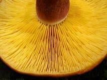 Giftige paddestoel Stock Foto's