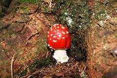 Giftige paddestoelen Royalty-vrije Stock Fotografie