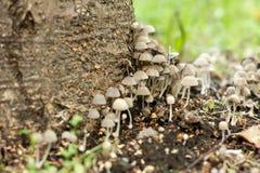 Giftige paddestoelen in het bos Stock Afbeelding