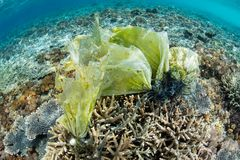 Giftige Stonefish op Coral Reef royalty-vrije stock afbeelding