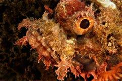 Giftige vissen Stock Afbeeldingen