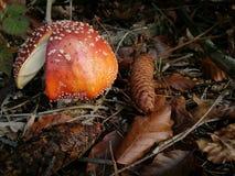 Giftiger Pilz lizenzfreie stockfotografie
