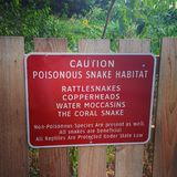 Giftigt ormvarningstecken Arkivfoton