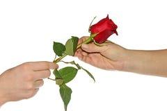 青少年的礼物他的母亲玫瑰 免版税库存图片