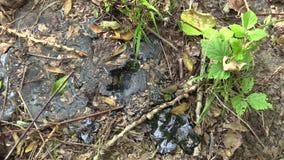 Giftlig avfalls för tidigare förrådsplats, raffinerad syntetmaterial och detalj för asfalt tjära, effektnaturgräsplan från kontam stock video
