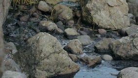 Giftligt vätskeflöda mellan stenar lager videofilmer