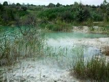 Giftligt vatten översvämmade kusten med träd Royaltyfri Bild