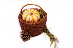 The Gifts of autumn. Pumpkin in a basket with a grass Stock Image