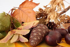 Gifts of Autumn. Stock Image