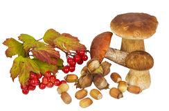 Gifts of autumn forest: mushrooms, nuts, berries viburnum Stock Photos