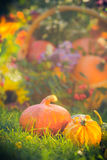 Gifts autumn garden pumpkins basket grass Stock Photography